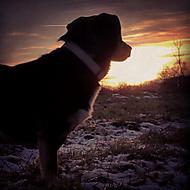 Viki v západu Slunce