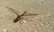 vážka váhala, ale já pohotově tasil