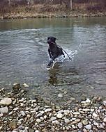 Ďaleké vodné zviera