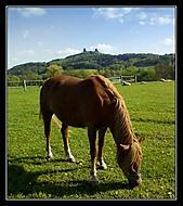 kůň a trosky..