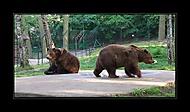 2 medvídci