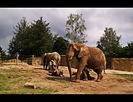 Sloní nuda