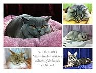 Kočičí souhrn