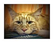 Kočičí 2