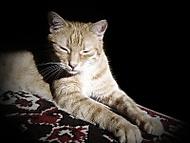 Kočičí relaxace
