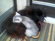 hafan a cica