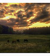 Nad stádem koní..