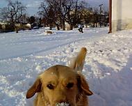 Můj pes Regi