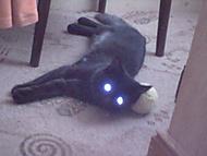 Svítící kočičák nebo SuperKočka?