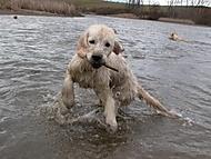 voda je fajn i pro psy