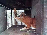 Veveruška - Malevil