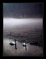 Milenci v mlhách