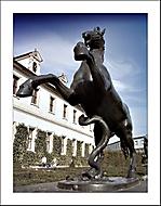 Naštvanej kůň ve Valdštejnské zahradě...asi ví proč (sídlo senátu ČR)