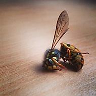 Nějaký hmyz