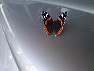 Motýl a T87