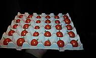 Uskladněná rajčata