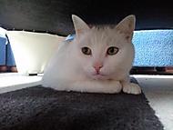Kočík zvaný Bagr