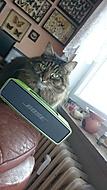 Kočka by raději asi Whiskas