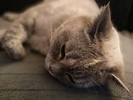 jak fotí Honor 8 - kočka