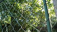Podzimní pavučinka za plotem