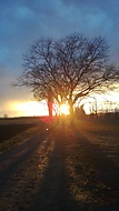 Slunce a stromy