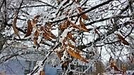 Listí na stromu