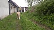 Pes důchodce na procházce