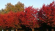 barvy podzimu ve městě