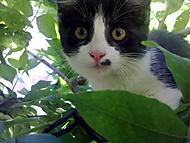koťátko :)
