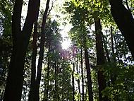 Cestou přes les...