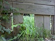 Díra v bráně