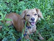 Můj pes Benny