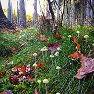 Ráno v lese (cloudcaller) – –