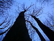 Stromoví v šeru