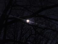 Stromovy v měsíčním svitu