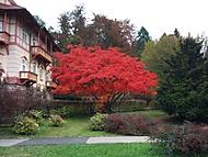 ,červený stromeček, :) kolonáda v lázeňských Luhačovicích