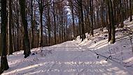 Mezibořský les, zima