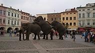 sloni na procházce Cirkus Humberto Frýdek-Místek 12/8