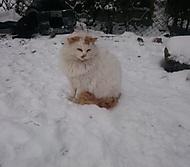 Venku na procházce 2017 kočka