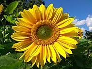Sluneč-nicový den v Greenwich park...