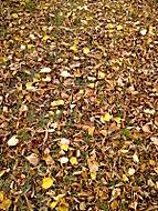 Prostě listí