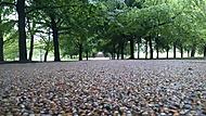 Cestou na Greenwich observatoř
