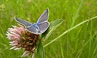 Butterflyjek