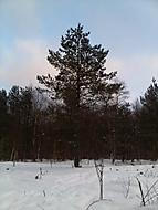 Tisá v zimě 2012