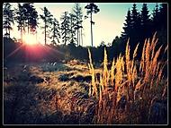Lesní sluníčková náladovka