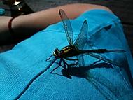 Vážka na vážkách
