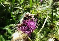 sdílený květ