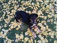 Psík Viki v čerstvě spadaném listí