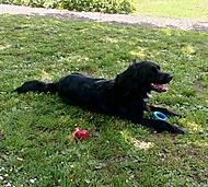 Na zahradě se psem