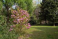 v botanickej záhrade
